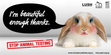 8 Reasons I Animals by 5 Reasons To Ditch Your Makeup Overthrow Martha