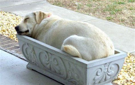 good dog beds romance bandits the most comfortable bed in the world