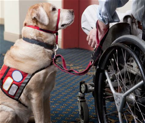 how to service dogs how do i explain service dogs to my children