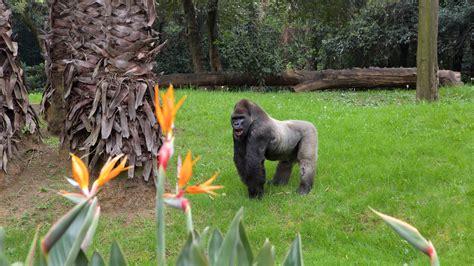 imagenes animales del zoologico fotos de animal ver im 225 genes de parque zool 243 gico de