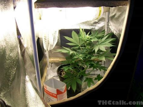small grow room small cfl marijuana grow room pictures to pin on pinsdaddy