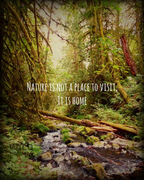 The Forest Would Be A Place Quote 11x14 Print West Coast Nature Photography Wise Nature