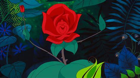 nel paese delle meraviglie fiori foto nel paese delle meraviglie for