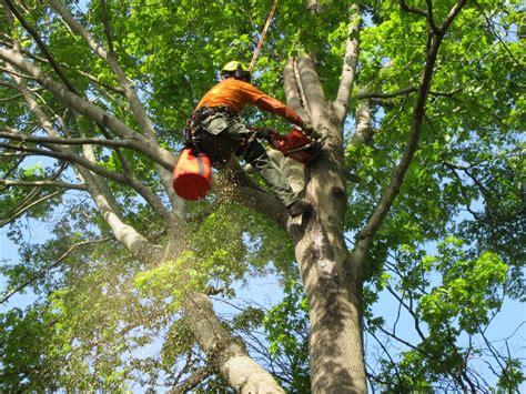 service indiana iron tree service wenham ma 01984 angies list