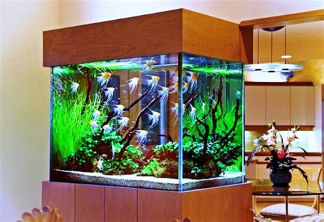 small fish tank decoration ideas interior design realistic fish tank decoration ideas tedxumkc decoration