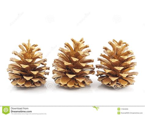 gold pine cones royalty free stock photo image 17004205