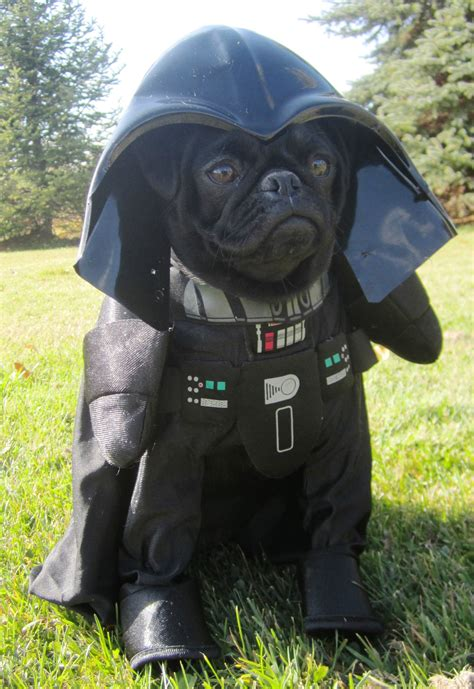 pug vader uncategorized archives page 2 of 3 about pug