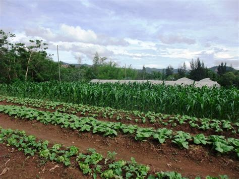 what is subsistence agriculture reference com