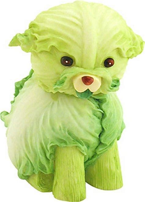 is cabbage for dogs cabbage and creative foods