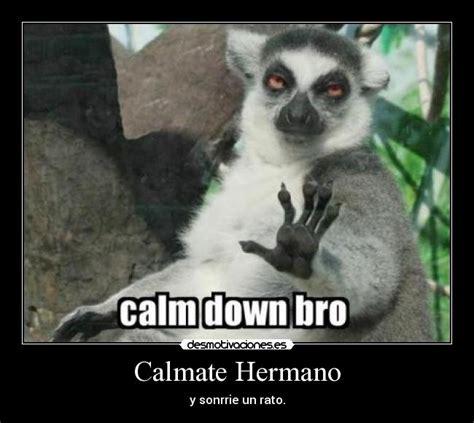 Lemur Meme - calm down bro lemur memes