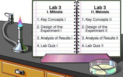 biology place lab bench 1620 best the biology classroom images on pinterest