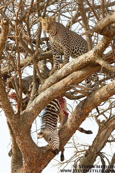lion giraffe leopard elephant zebra ostrich antelope waterbuck cheetah olivebaboon