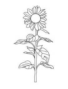 sunflower coloring page sunflower coloring pages world