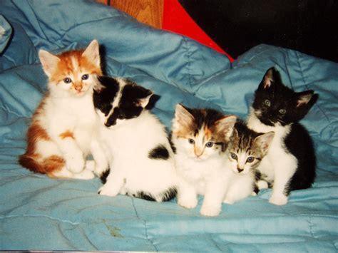 Litter Of Kitties by File Litter Of Five Kittens Jpg Wikimedia Commons