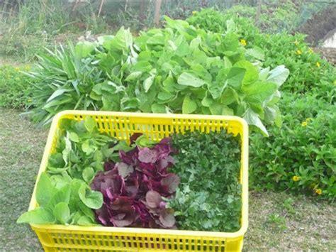 pertanian menanam sayuran