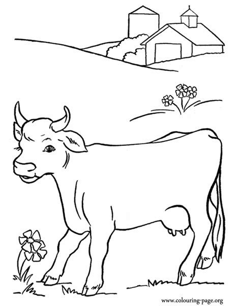 cow calf coloring pages freecoloring4u com