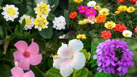 fiori da giardino pieno sole 10 magnifici fiori da coltivare in pieno sole guida giardino
