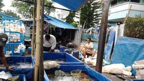Lu Hias Bandung sentra ikan hias tegallega omzet melonjak 3
