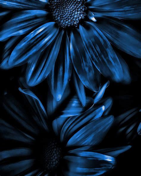 blue artist midnight blue gerberas by bonnie bruno