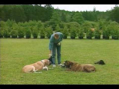don sullivan trainer don sullivan the dogfather the bites attacks australian