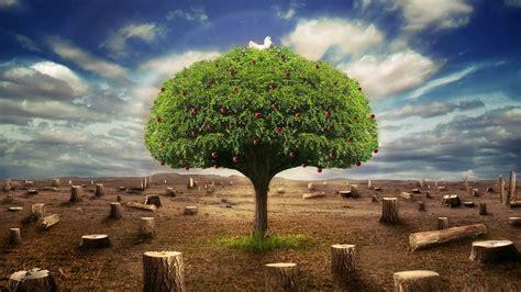 imagenes justicia ambiental ecolog 237 a y pol 237 tica diciembre 2013