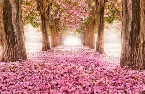 wallpaper bunga sakura untuk android jual wallpaper dinding custom nature bunga sakura asian
