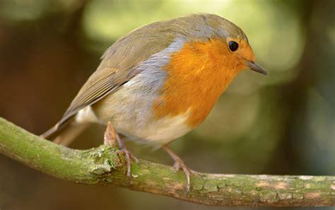 comedero para aves natural y biodegradable duendevisual comedero para p 225 jaros con materiales naturales