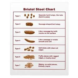bristol stool chart zazzle