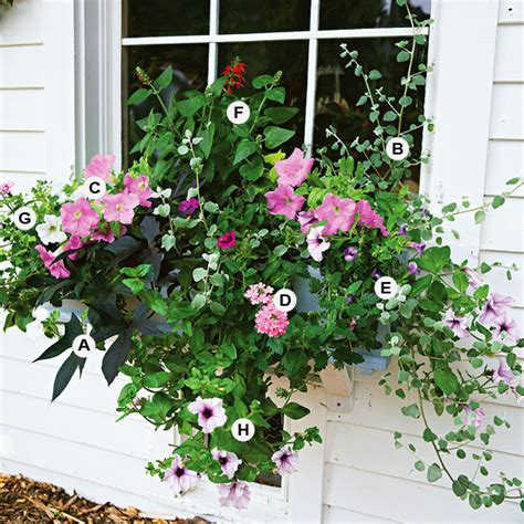 plants for container gardens a gallery of beautiful container garden ideas