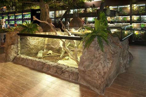vivarium images  pinterest tortoise