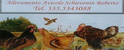 allevamento di animali da cortile avicoltura belluno allevamento schievenin roberto