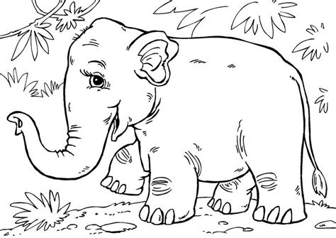 asian elephant coloring page coloring page asian elephant img 27854