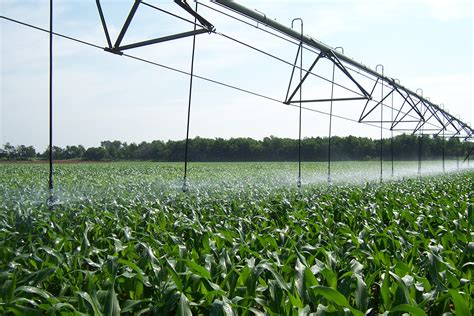 Irrigated Corn | corn irrigation project variable n application in corn