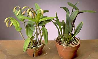 plants that grow in complete darkness orchids 101