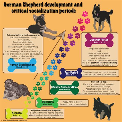 can an older dog be house trained german shepherd puppy training guide