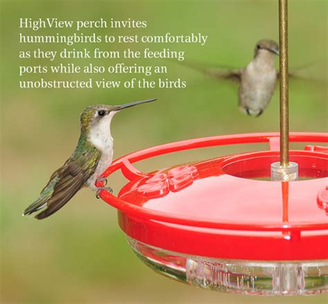wild birds unlimited when to put up your hummingbird feeder