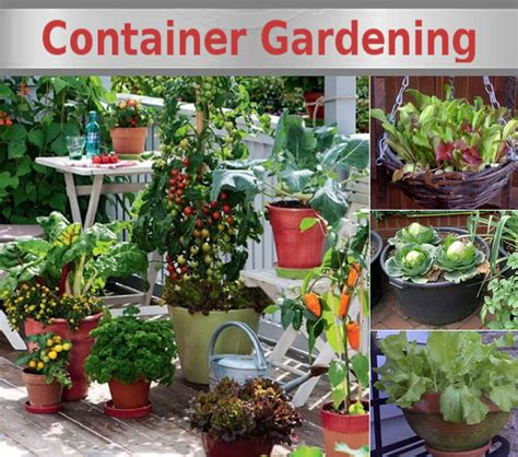 how to make a container vegetable garden growing vegetables in containers