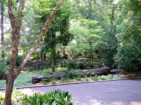 Botanical Gardens Athens Ga Athens Botanical Gardens Ga State Botanical Garden Athens Ga Places To Travel 1000 Images