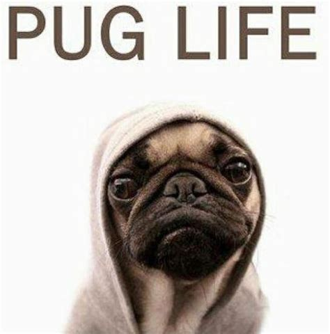 the lincoln chronicles puppy wisdom for happy living books pug picture quotes