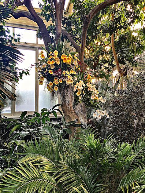 new york botanical gardens show the new york botanical garden orchid show quintessence