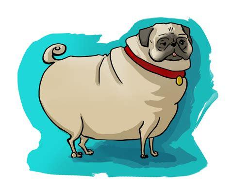 fattest pug pug kristin tipping