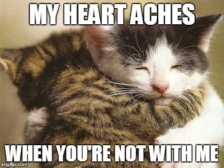 Cat Hug Meme - hug cats imgflip