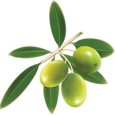 olive clipart olives png images free download olive png