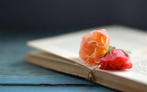 flower books flowers roses flower book bokeh wallpaper 2560x1600