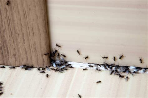ants in bathroom in winter ants in bathroom in winter 28 images plumbing tips