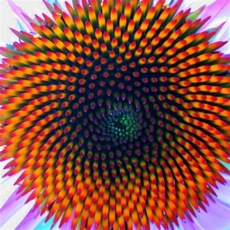 flower of life pattern in nature le piante i frattali e la ricerca della bellezza