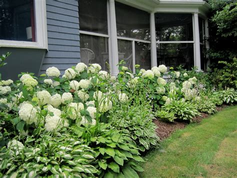 success with hydrangeas a gardener s guide books hydrangea heaven enchanted gardens