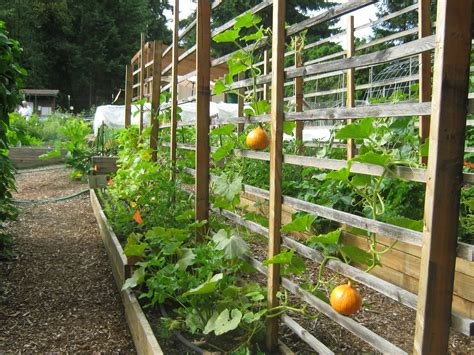 Community Garden Ideas Community Garden Ideas Www Pixshark Images Galleries With A Bite