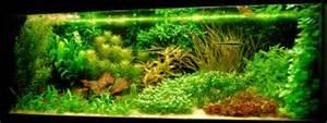 Aquascape Piranha Show Je Aquarium Showcase Van Miklo