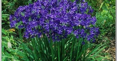 perennials that bloom all summer long blue perennial flowers that bloom all summer gardening